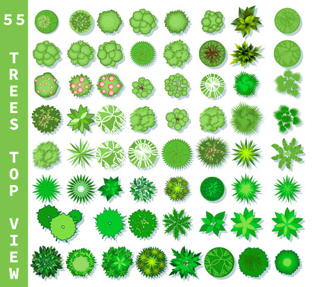 Different trees top view. View from above set for architectural and landscape natural green space design. Vector Illustration