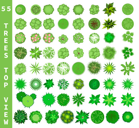 Different trees top view. View from above set for architectural and landscape natural green space design. Vector Stock Photo