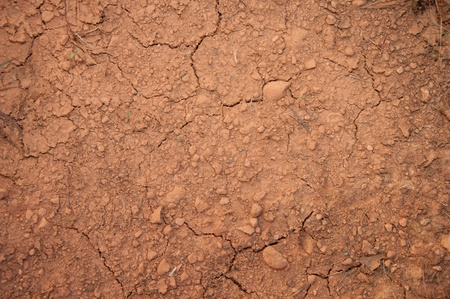 a picture of cracked soil with less plants photo