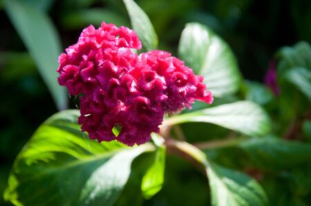a picture of beautiful red flower blossom