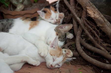 a picture of beautiful cat family