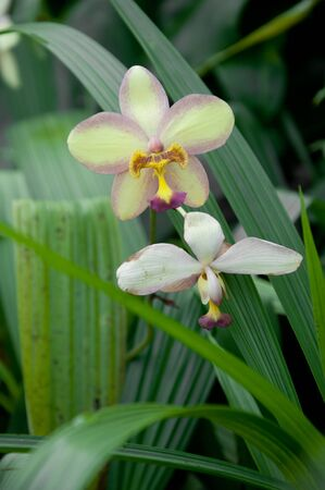 orchid Stock Photo - 11573599