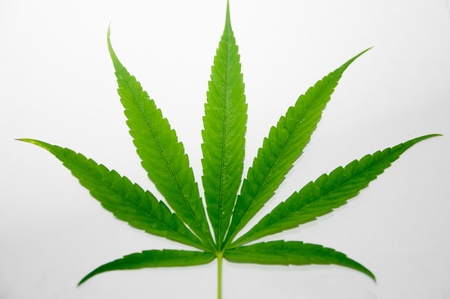 marijuana leaf Stock Photo
