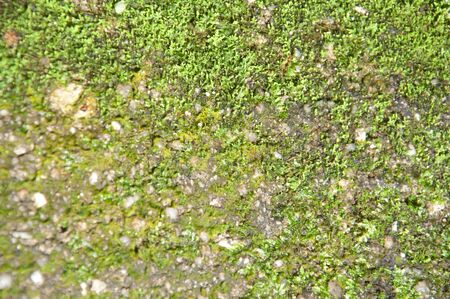natural moss on stone photo