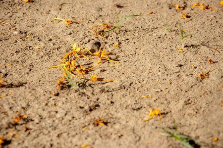 yellowe flower drop on ground Stock Photo - 13713812
