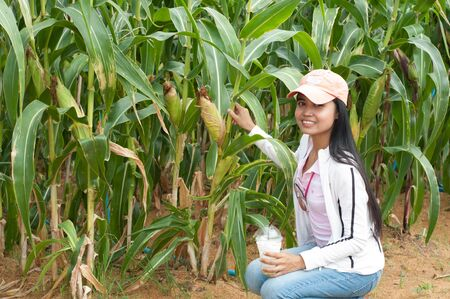 asian woman and sweet corn planting