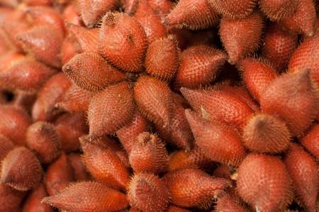Rakum palm fruits - Salacca wallichiana C. Martius Stock Photo