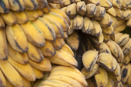 musa: Saba Banana - Musa (ABB Group)