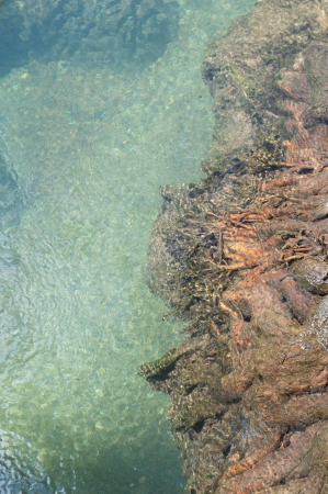 tree roots and clear water at Tapom two water canal in krabi, thailand Stock Photo - 17006640