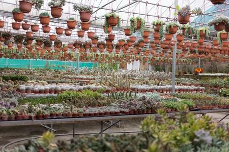 types of cactus: many type of plants in garden nursery