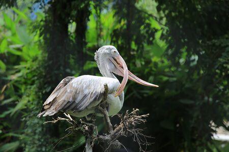 egrets: Wierd Mouth Old White Egrets