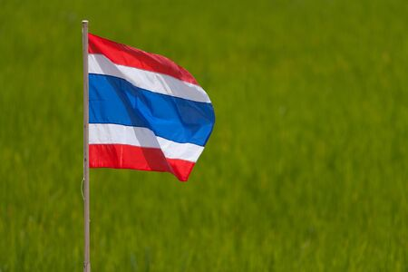 rice field: Thaiflag with rice field background