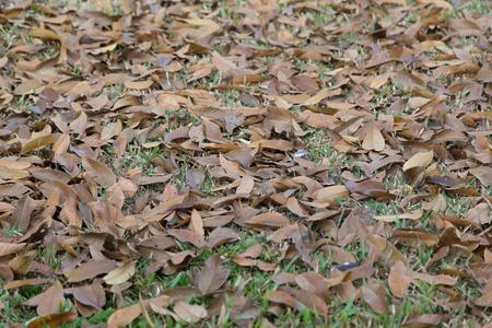 hojas antiguas: hojas viejas en campo de hierba en la naturaleza