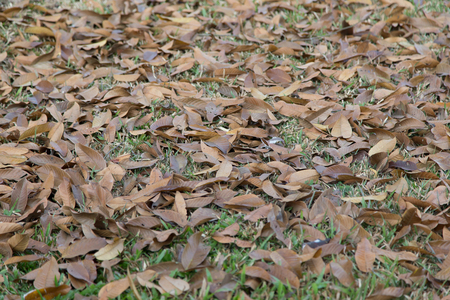 hojas antiguas: old leaves on grass field in nature