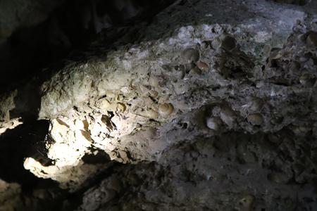 Ancient Clam Shell Fossil at Kao Pina in Trang, Thailand