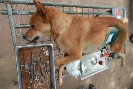 sterilize: Dog have birth control - sterilize