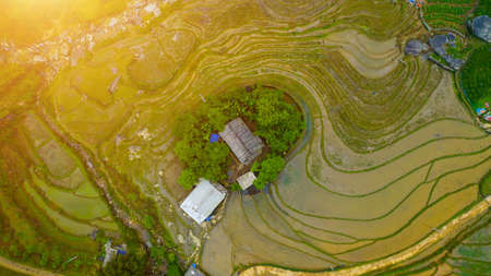 Aerial top view of paddy rice terraces, green agricultural fields in countryside or rice field terraces. Mountain view in the clouds in Sapa, Lao Cai Province, Vietnam in Asia