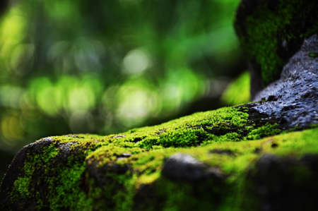 Moss rocce coperte Archivio Fotografico