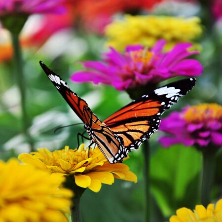 colorful butterfly: Butterfly and flower