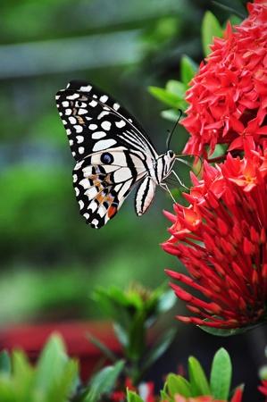 Papillon et fleur Banque d'images - 9974273