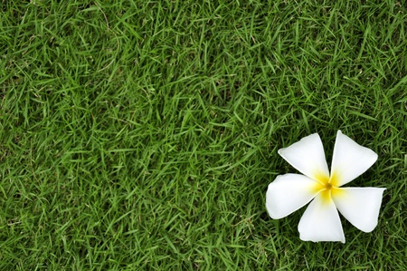 White flower on the green grass photo