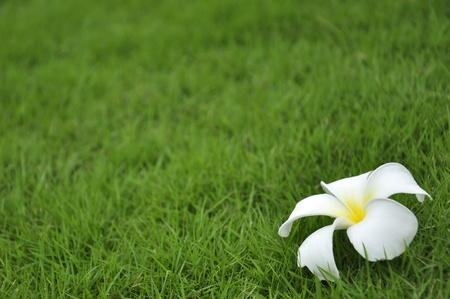White flower on the green grass Stock Photo - 9974255