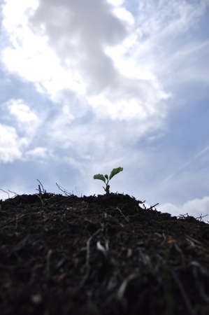 New life. Germ of a plant, in the ground photo
