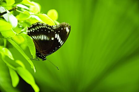 live again: Butterfly on green leaf