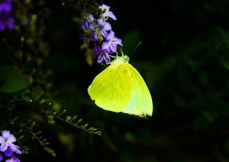 live again: Butterfly on flowers