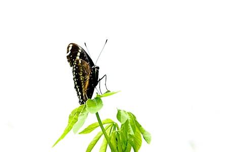 origen animal: Mariposa en la hoja verde Foto de archivo