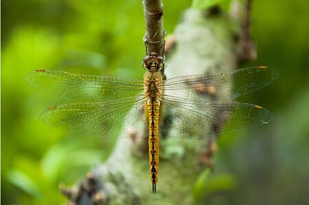 live again: dragonfly