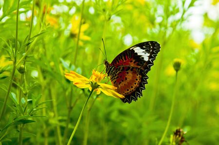 live again: Butterfly