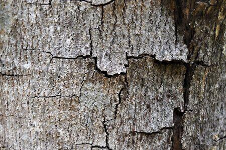 Close Up Of Pine Tree Bark Texture photo