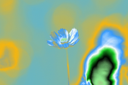 Pop Art Blue Cosmos Flower photo