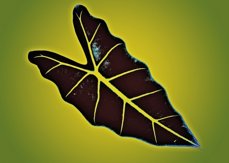 art leaf abstract background for design photo