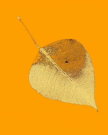 art leaf autumn abstract background for design photo