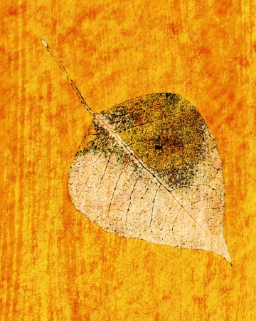 art materials: Art leaf grunge background with an antique style
