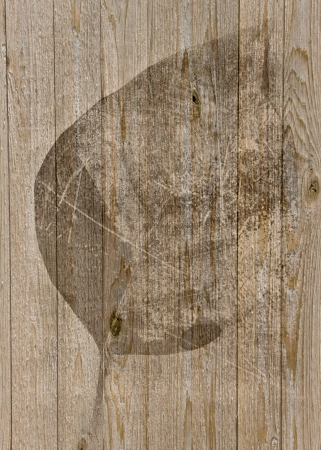 Old photo art leaf grunge textures background photo
