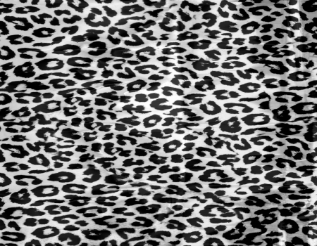leopard fur: Black and white leopard print background Stock Photo