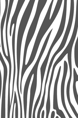 grey and white zebra skin animal print pattern photo