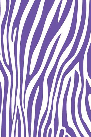 Purple and white zebra skin animal print pattern Stock Photo - 15447577