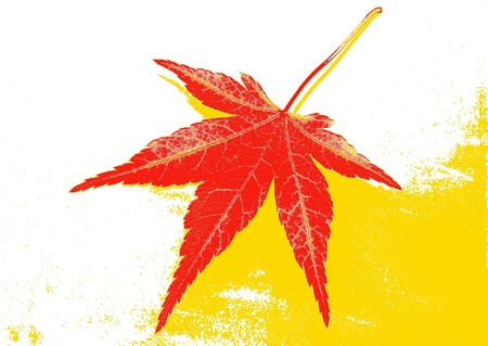 Red leaf on white and yellow background photo