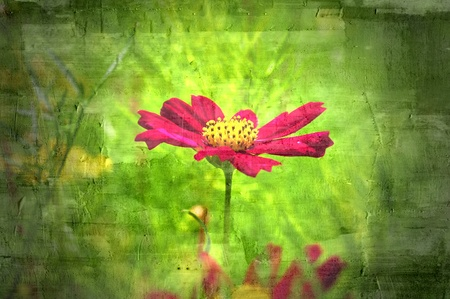 flower abstract textures and backgrounds Stock Photo