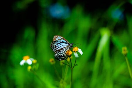 Butterfly on flower insect nectar morning