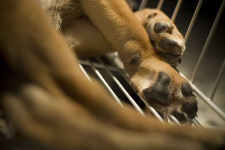 inhumane: Closeup of a puppy leg a cage. Stock Photo
