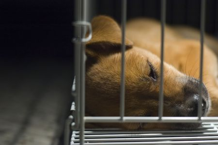 lockup: A young brown puppy lockup in cage sleeping.