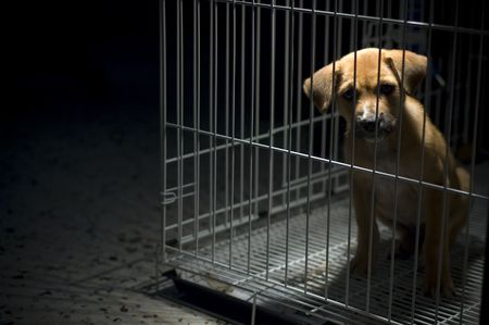 inhumane: A sad looking puppy wanted to come out from his cage. Be kind to all animals Stock Photo