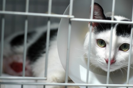 confined: Injured Cat