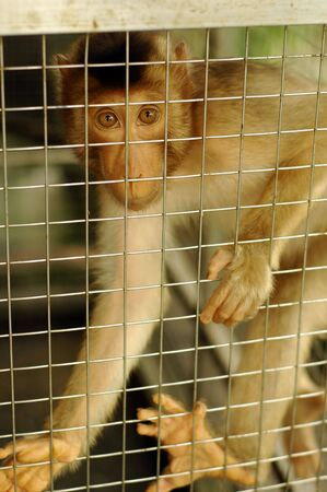 Sad Monkey Caged Stock Photo - 2912933