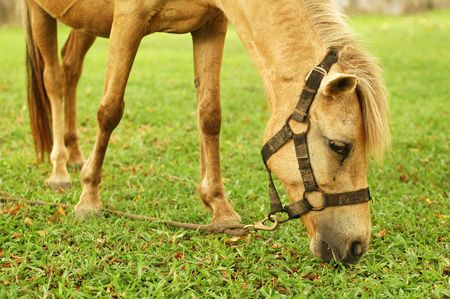 Horse tied up Stock Photo - 3104717